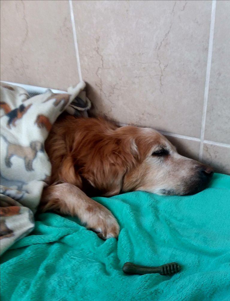 Dog Sitters Eau Claire Wi