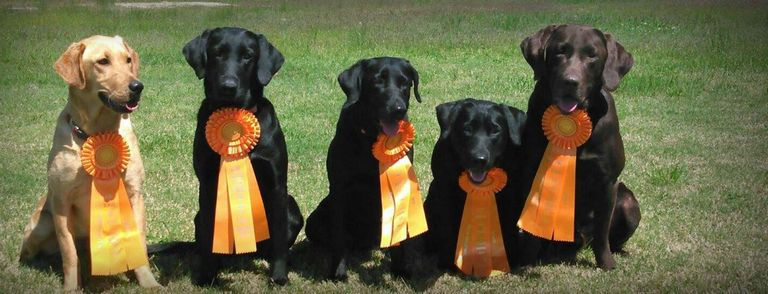 Dog Training Beaumont Tx