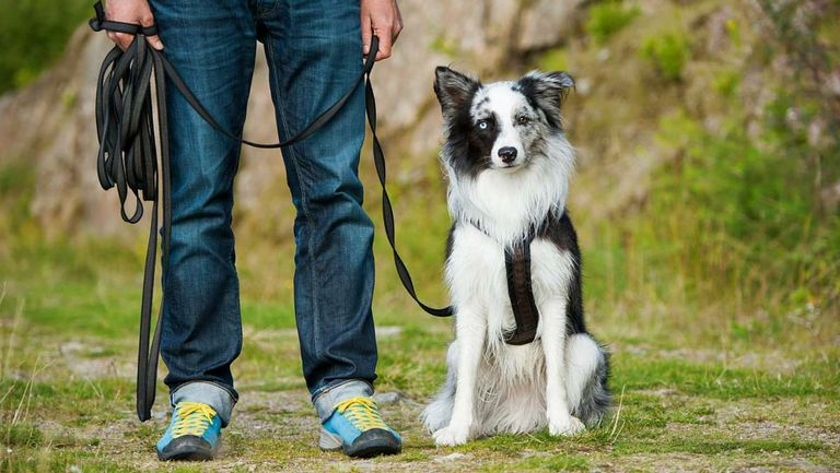 Dog Training Best Dog Training Books