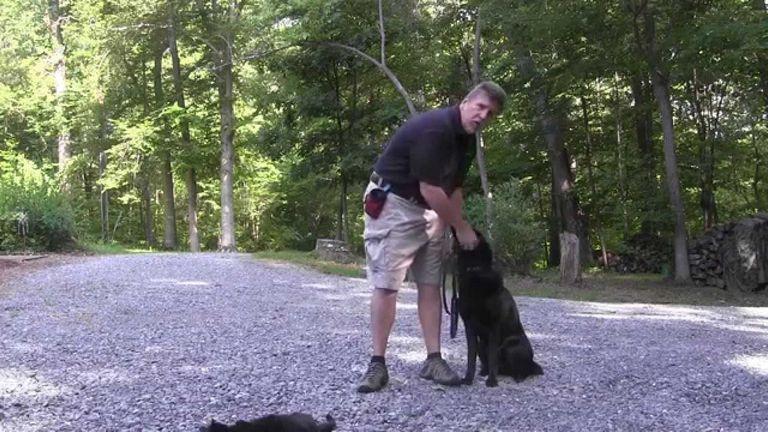 Dog Training Clemmons Nc