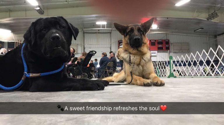 Dog Training Eau Claire Wi