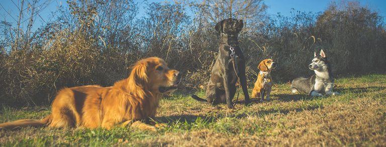 Dog Training Illinois