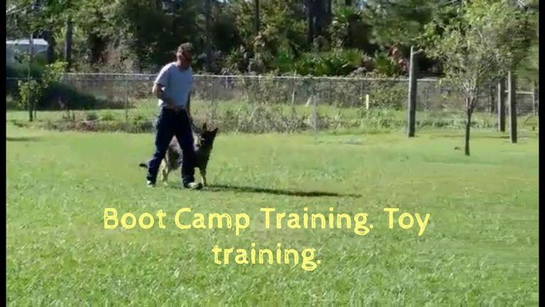 Dog Training Punta Gorda Florida