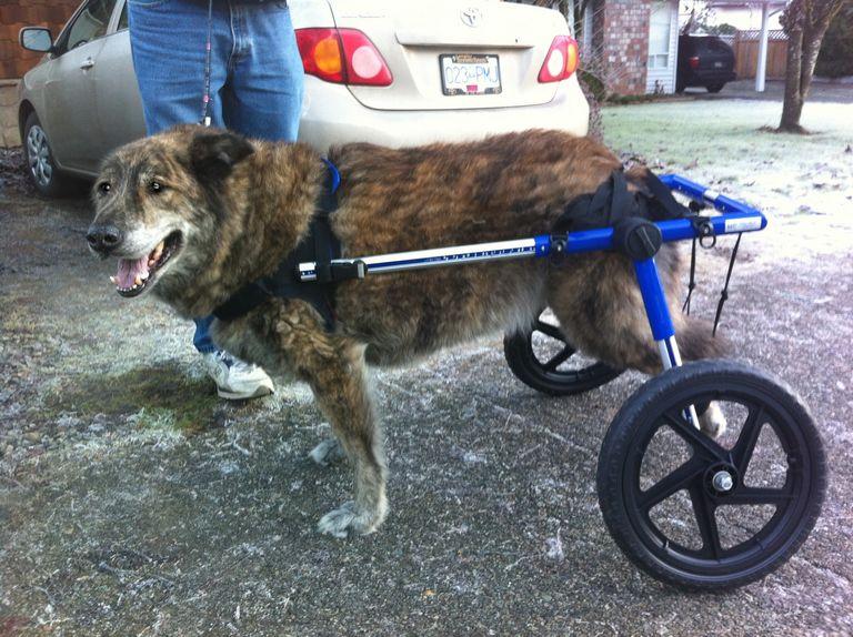 Dog Wheelchair For Back Legs