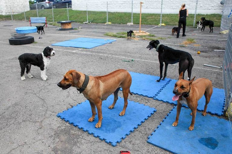 Doggy Day Care East Syracuse Ny