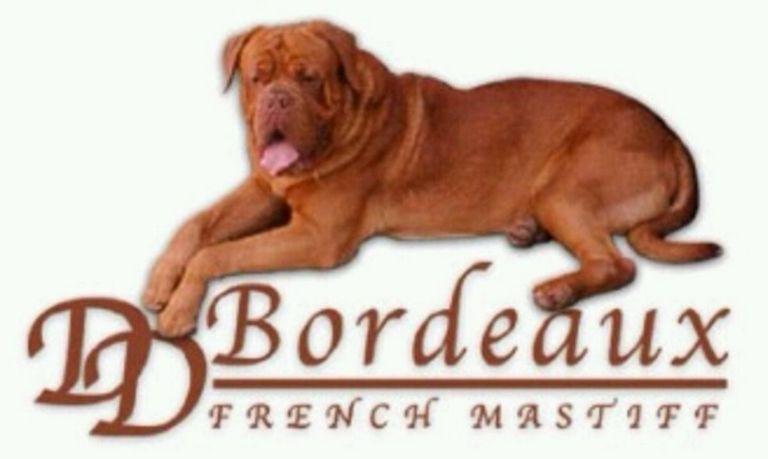 Dogue De Bordeaux For Sale In Michigan