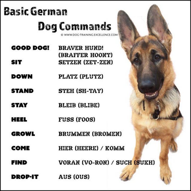 Dutch Dog Commands