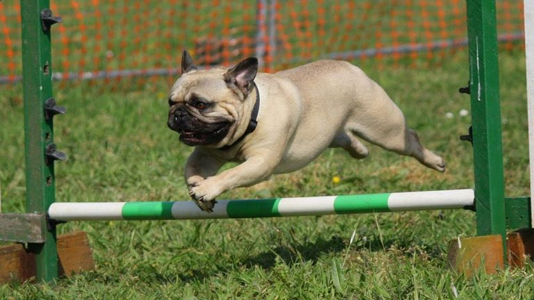 Easiest Dog To Potty Train