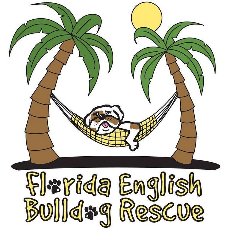 English Bulldog Rescue Florida