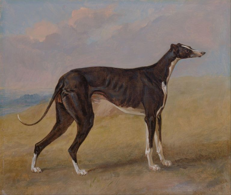Famous Greyhounds In History