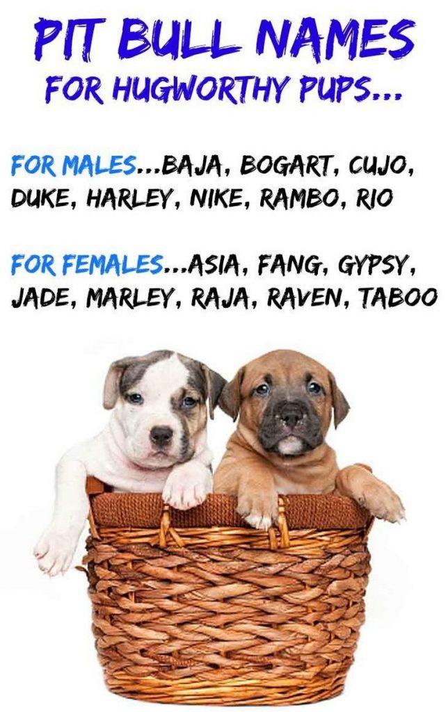 Female Pitbull Names