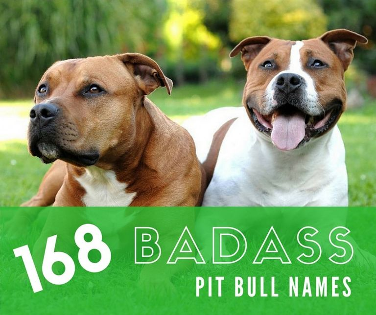 Female Pitbull Names And Their Meanings