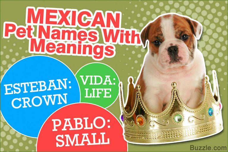 Female Pitbull Names Spanish