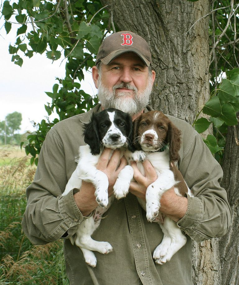 Field English Springer Spaniel Puppies For Sale