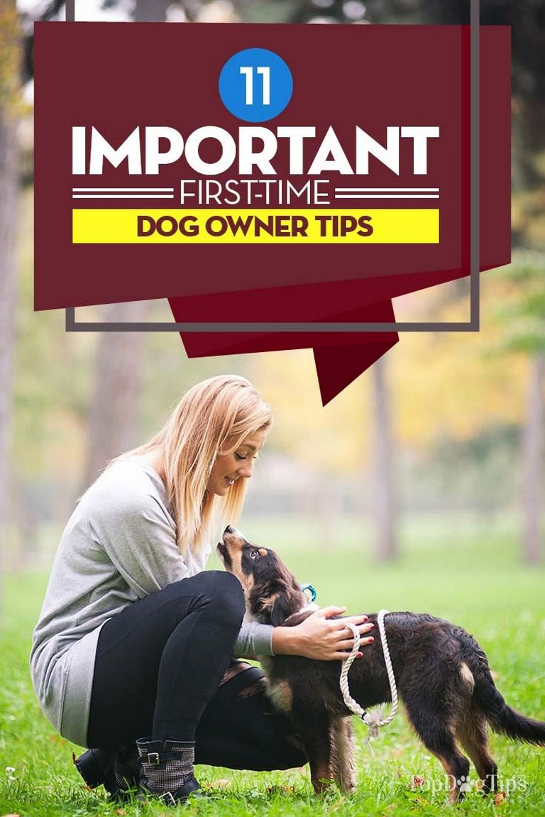 First Time Dog Owner Guide