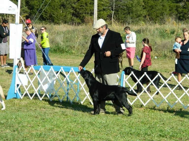 Foy Trent Dog Shows Online Entry
