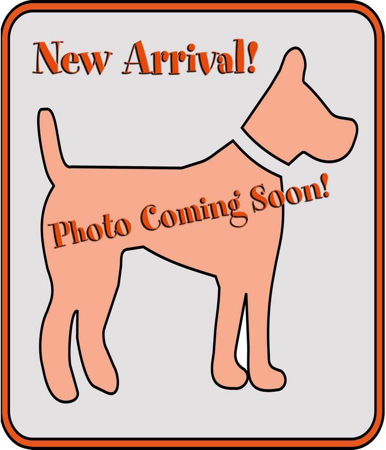 Franklin County Dog Shelter & Adoption Center Columbus, Oh