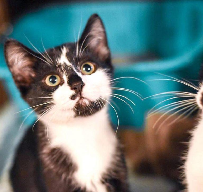 Free Kittens Cleveland Tn
