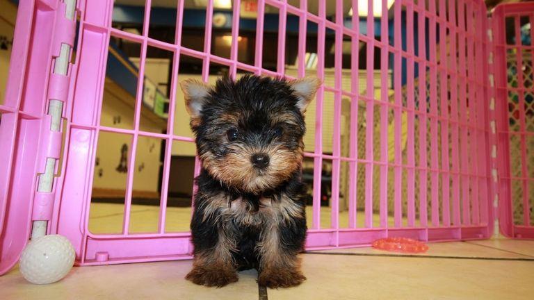 Free Puppies Augusta Ga
