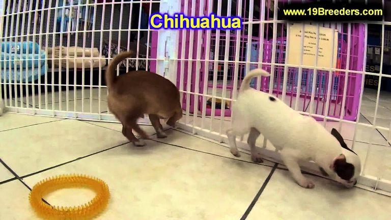 Free Puppies In Wichita