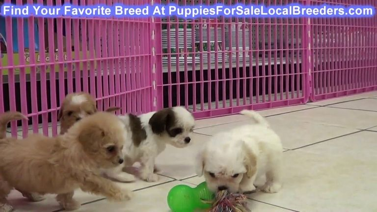 Free Puppies In Wilkes County