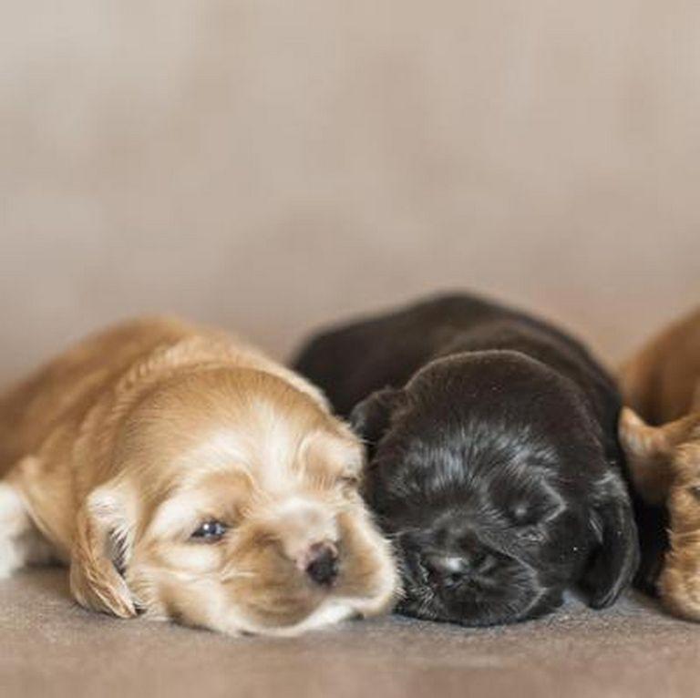 Free Puppies Toledo Ohio | Top Dog Information