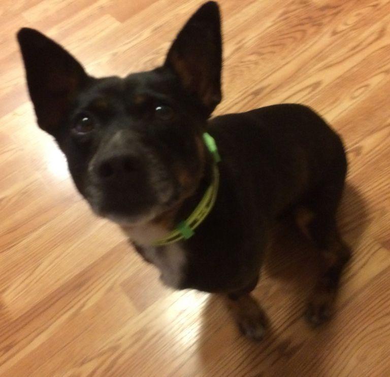 French Bulldog Rescue Toledo Ohio