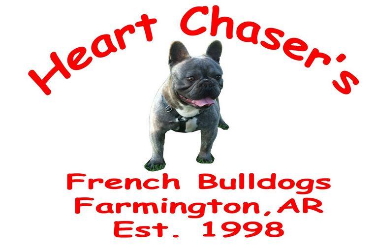 French Bulldogs Central Arkansas