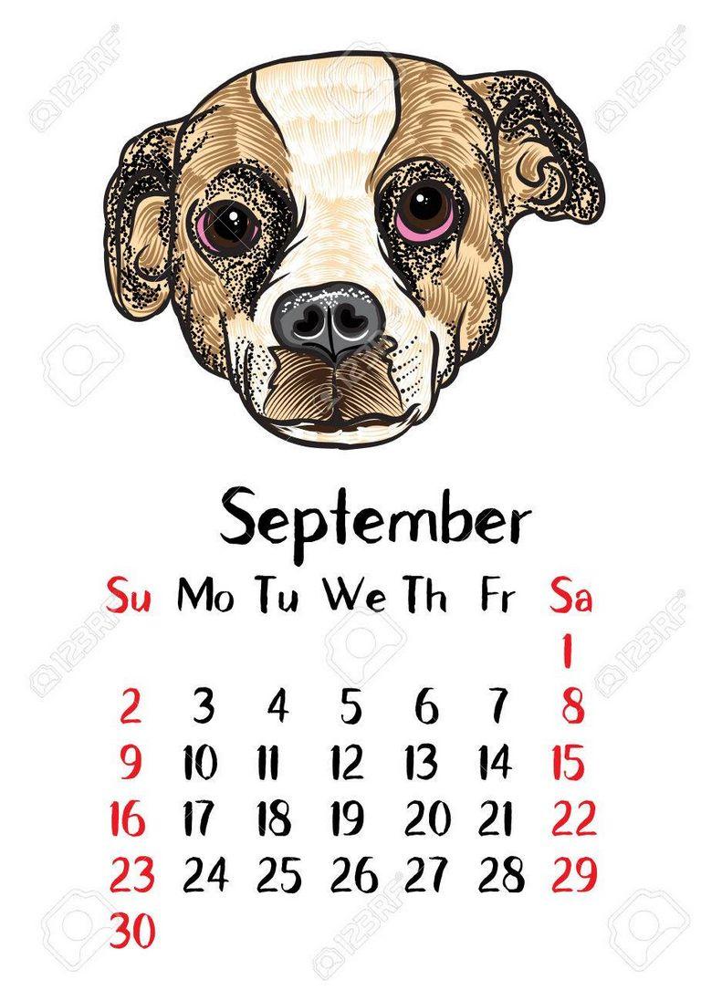 Funny Dog Calendar 2018