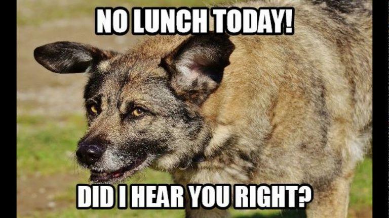 Funny Dog Memes 2018