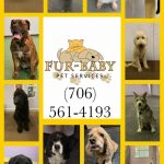 Fur Baby Pet Services Columbus Ga