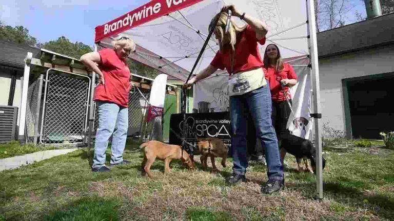 Georgetown Spca Top Dog Information
