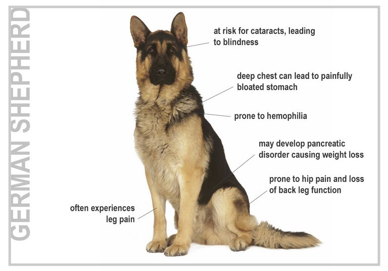 German Shepherd Breeds List