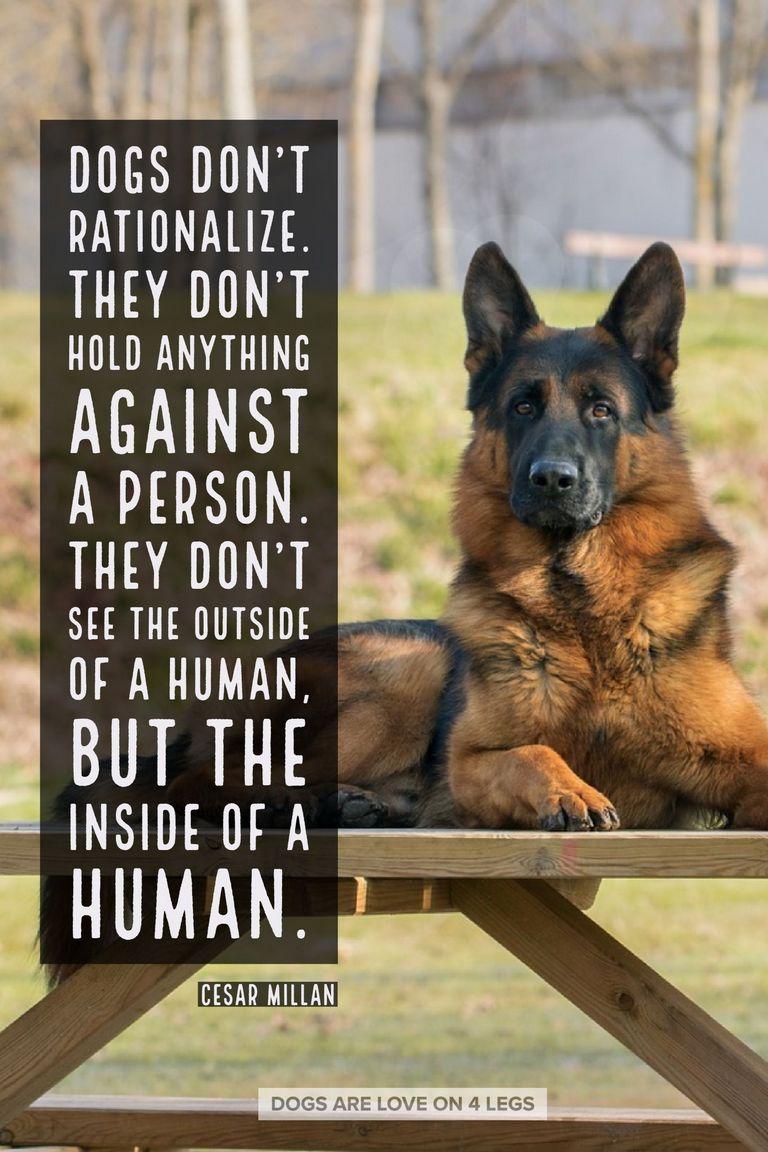 German Shepherd Inspirational Quotes