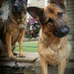 German Shepherd Lovers Website