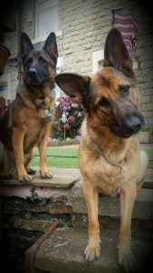 German Shepherd Lovers Website