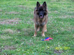 German Shepherd Rescue Pa