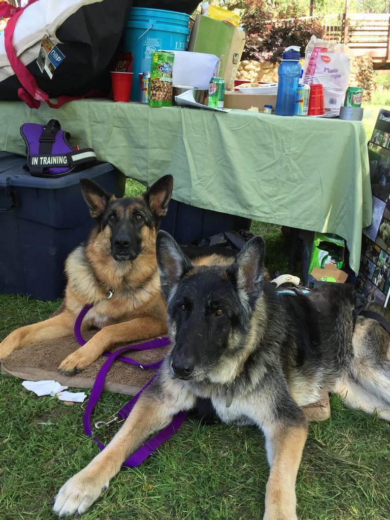 German Shepherd Rescue Reno Nevada
