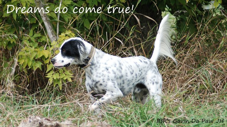 German Wirehaired Pointer Rescue Midwest