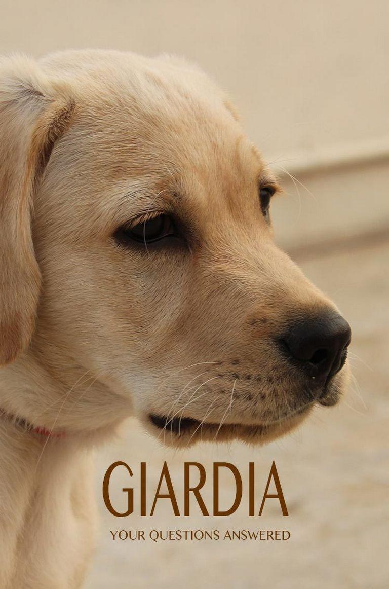 Giardia Won't Go Away In Human
