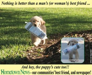 Golden Retriever Breeders Florida
