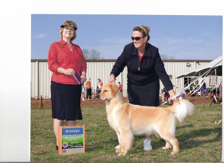 Golden Retriever Breeders Near Hilton Head