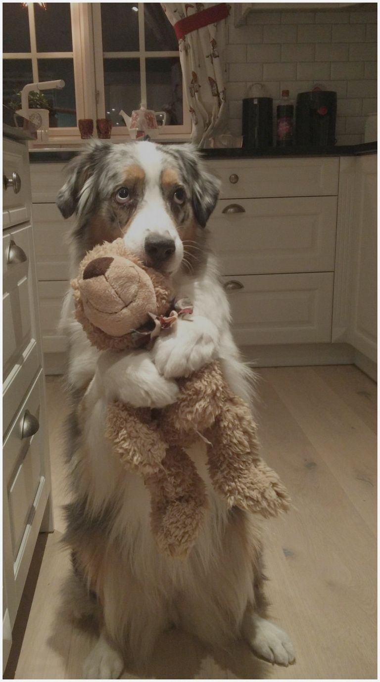 Golden Retriever Puppies For Sale In Ga Craigslist | Top ...