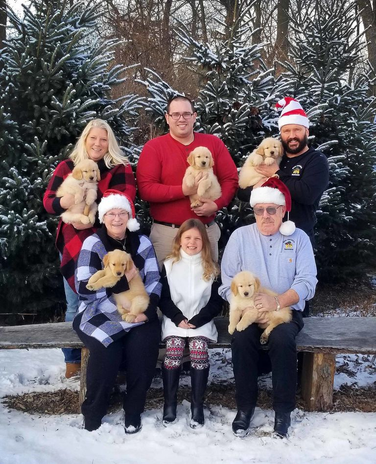 Golden Retriever Puppies For Sale In La Crosse Wi