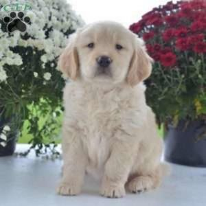 Free Puppies Knoxville Tn Top Dog Information