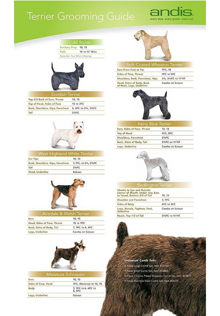 Goldendoodle Grooming Chart