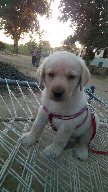 Good Companion Dog Breeds