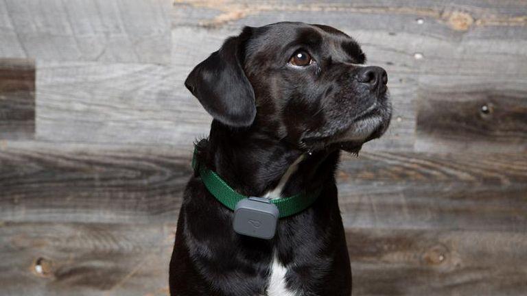 Gps Dog Collar No Monthly Fee