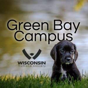 Green Bay Humane Society Lost And Found