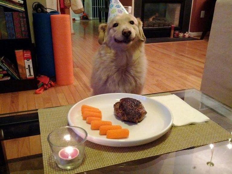 Happy Birthday Dog Gif Images